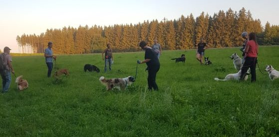 HundeVoll Team